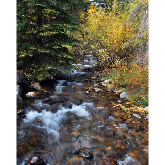 Trees with stream fall colors fine art photograph print 8x10
