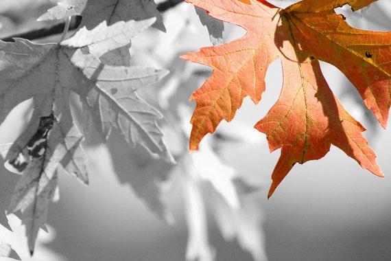 Orange leaf with interesting black and white background