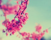 Flower Photography - fine art photo print red bud tree pink ombre teal blue sky photograph wall art vintage
