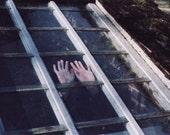 Greenhouse-- 4 x 6 Photography Print