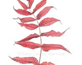 Red Black Silver  Watercolor and Graphite of Sumac Leaves
