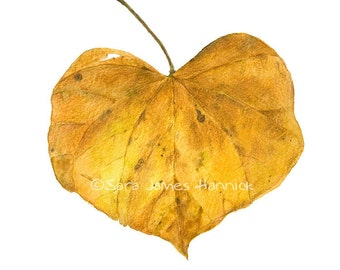 Heart Shaped Red Bud Leaf in the Fall