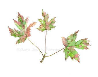 Three Watercolor Maples Leaves Red and Green