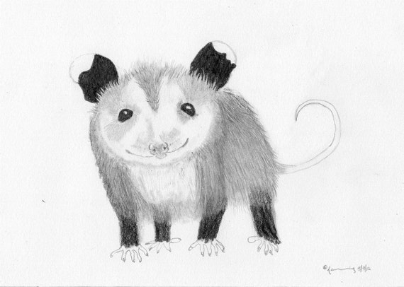 Baby Possum Drawing - 5 x 7 Original Drawing