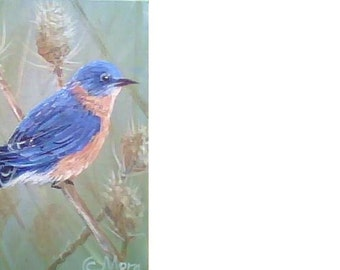 Bluebird - Original, Treasury
