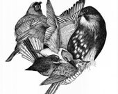 Black & White Fine Art New Zealand Bird Print