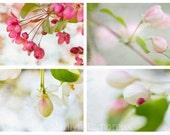 Apple Blossom Art Print Set - Spring Flower Photography Set of 4 Art Prints - Fine Art Photographs - Soft Pink White Green Flower Wall Art