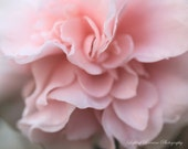 Pink, Soft, and Sweet My Darling- Fine Art Print-8x10 - LightofLorrainePhoto