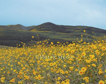 Death Valley Wildflowers Greeting Cards, Set of 8