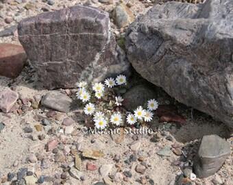 Desert Wildflower Greeting Cards, Set of 8
