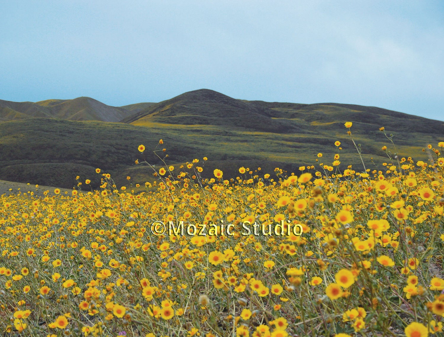 Death Valley Wildflowers Greeting Cards Set of 8
