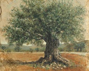 In all his Glory, Israeli ancient olive tree. By Miki Karni