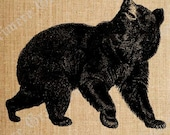 Antique Bear Animal Digital Graphic Download Great for DIY Scrapbooking Iron On Shirt Transfers Greeting Cards Burlap Decor Eco Totes