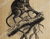 Sprectral Tarsier Monkey Digital Clip Art Great for Printed Cards Scrapbooking Pillows Toted Iron on Transfers