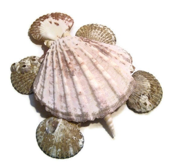 Items Similar To Sea Shell Turtle Sea Turtle Home Decor