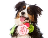 Small Custom Flower Dog Corsage: Ring Bearer, Pet Attendant, Wedding/Bridal for Dogs (Pet Accessories)