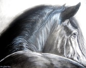 Black Horse Drawing in Charcoal and Carbon Pencil, Print, 8x10 Inches