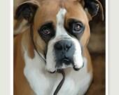 Pet Portrait, Boxer Photo, Animal Photography, Dog Photo, 8x10 Photo, Photo Art, Boxer Photo