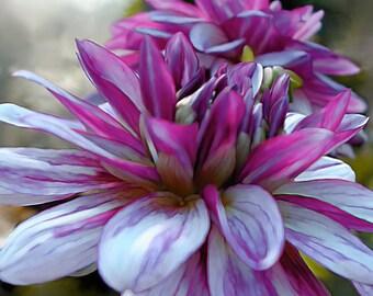 Flower Photograph, Dahlia Photo, 8x8 Photo, Purple Flower, Purple Art Print, Close Up, Archival Photo