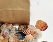 Red Scallop Seashells, DIY Beach Wedding Decorations, Craft Shells, Bulk Sea Shell Supplies, Nautical Decor