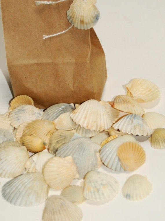 Craft Shells, Scallop Seashells, White with Pastel Shades of Color Sea Shell Supplies, Beach Theme Wedding Decor, Beach Home Decorations