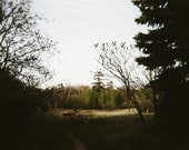 Take a Walk Romantic Forest Path on Film Dreamy Woodland Trees Natural Fine Art Photography  5 x 7