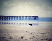 Vintage Film Tolkien Quote Dog Beach Blue Sand Fine Art Photography -  8 x 12