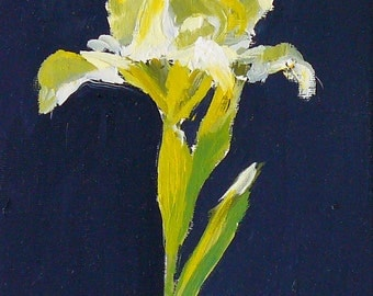 Still Life Painting,  Yellow Iris on black, Original Oil on small canvas 6x6 inch Canada fine art square art