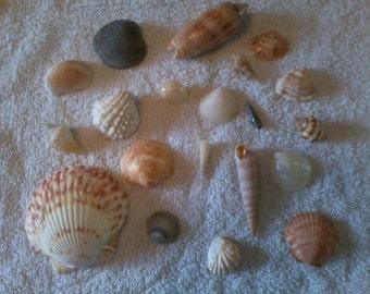 Sea shells assortment