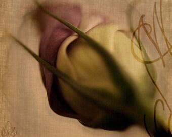 Promesse - 8x10 (20 x 27 cm) Fine Art Photograph