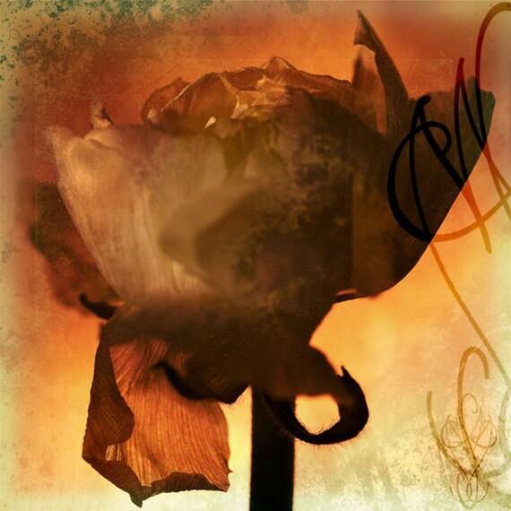 Embrasement - 8x10 (20 x 27 cm) Fine Art Photograph