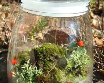 Woodland Mossy Lichen TERRARIUM kit...New England Style-MODERN JAR included