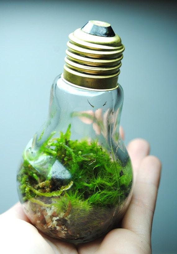 The bright idea terrarium with live ecosystem desk object