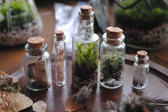 Forest Specimen Set Bottle Shelf Item with Terrarium