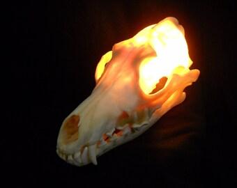 "7"" Lighted Coyote Skull Light Real Bone Animal Lamp Taxidermy night light weird art lighting"