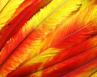 10 Tie Dye Feather Extensions CRUELTY FREE Orange Red and Yellow Ombre color Emu Feathers for hair FTHR11