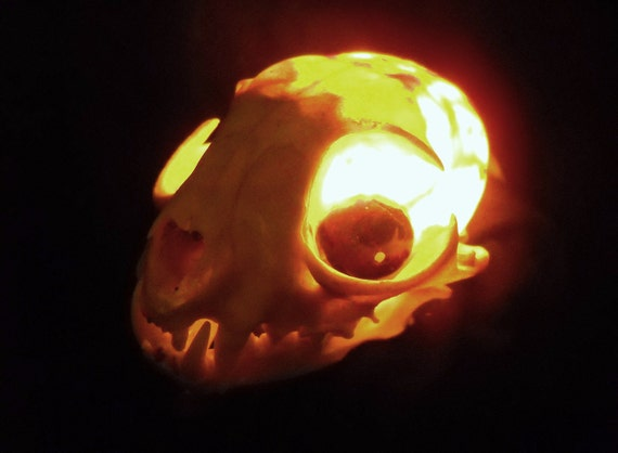 Lighted Skull Real Bone Bobcat Animal Skull Lamp Nightlight Taxidermy Bones