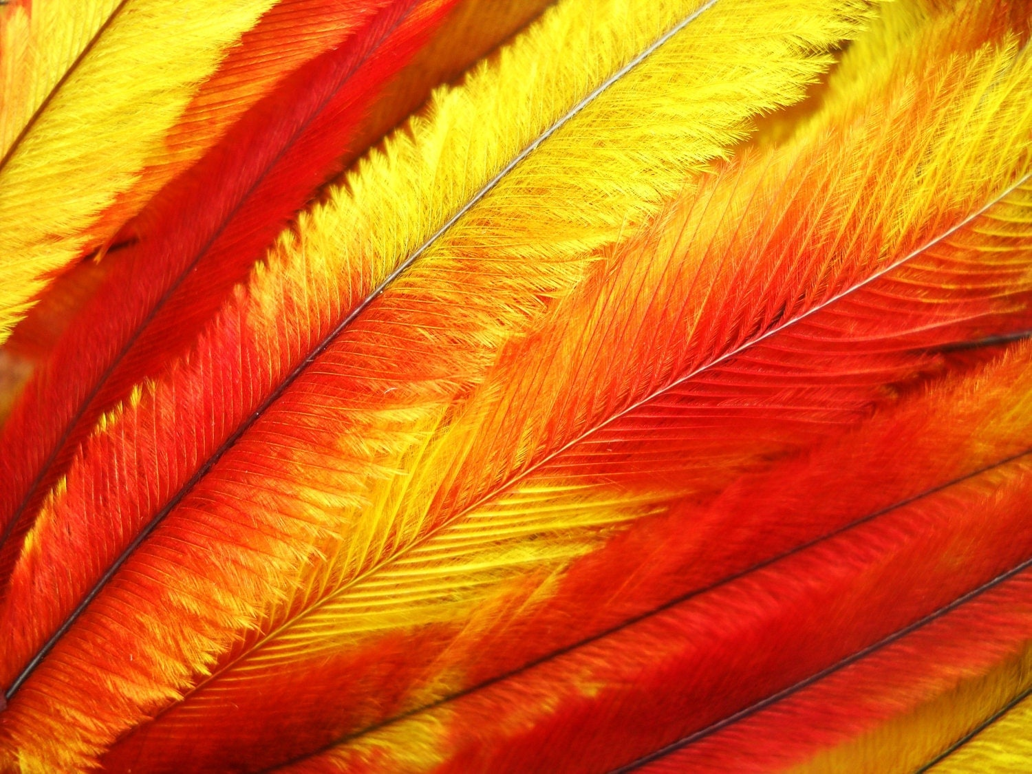 10 Tie Dye Feather Extensions Cruelty Free Orange Red And