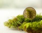 Real moss forest brooch - woodland  handmade green moss pin -  Pleurozium schreberi