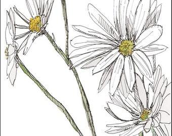 White Daisies Painting, Fine art print 8x10, Digital illustration, Gardener & Naturalist, Naturalist Art, nature, decor gift idea for her