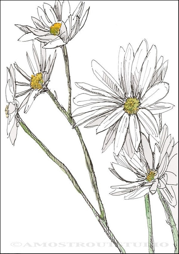 White Daisies Painting, Fine art print 8x10, Digital illustration, Gardener & Naturalist, Naturalist Art, nature, decor gift idea for her