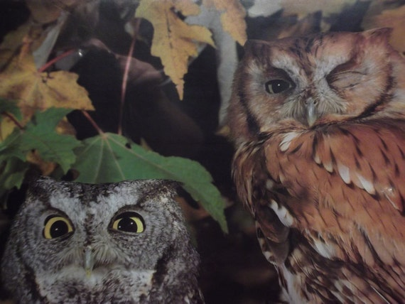 Large Vintage Owl Photograph/Poster