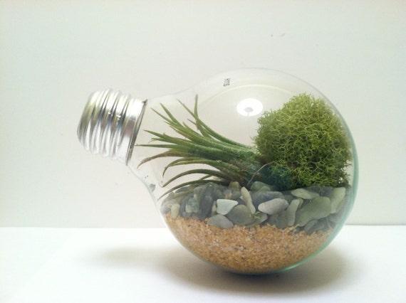 Light Bulb Terrarium- large globe