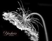 Glowing flower-  Fine art photographic print,  black and white,  home decor, abstract, art deco
