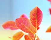 Fall leaves-  Fine art photography print of leaves. Yellow orange fall decor. For home decor.
