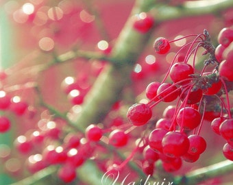 Lit by the sun- Bokeh red berries Fine art photography print Red berries shining in sunlight, pastel, holiday gift, decor.