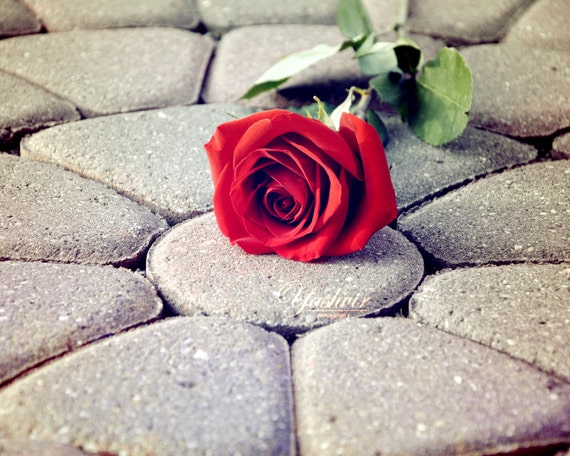 THE BRICK ROSE-  strong symbol of love. Fine art photographic print of a rose on a brick floor, home decor, holiday gift.
