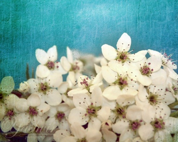 Cherry blossoms- Photography print of flowers. Rustic Blue teal background. Enchanted and romantic. Spring home decor.