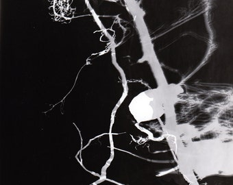 """One of a kind """"Root"""" photogram - 7x9inch art decoration"""