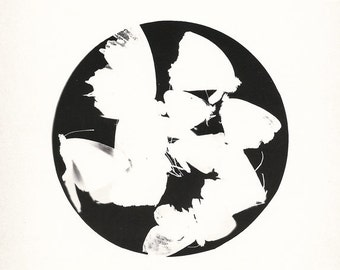 One of a kind photogram - 6x8inch art decoration